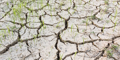 Cracked soil in a dried paddy field.